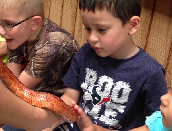 The Wetlands Center Snake