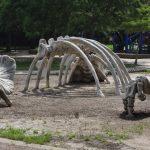 Travis Spark Park Dinosaur Bones1