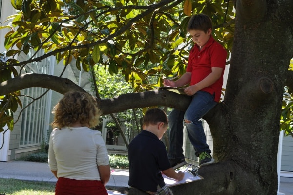 Drawing in Tree Outside Menil Collection
