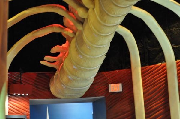 Houston Health Museum Rib Cage