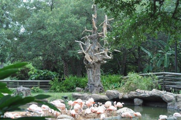 Houston Zoo Flamingos