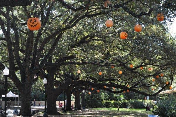 Houston Zoo Jack o Lantern Pumpkin Trees