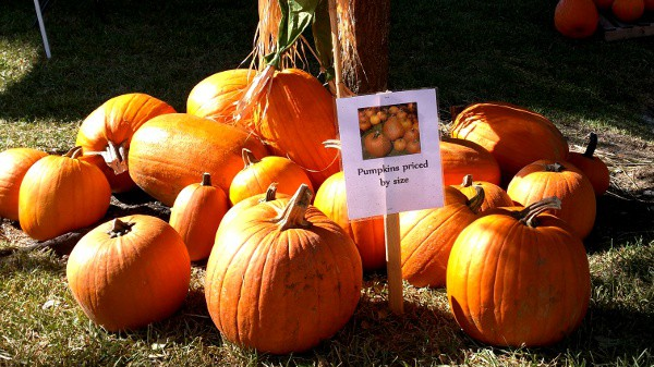 St James Pumpkin Patch
