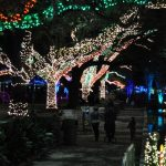 Houston Zoo Lights: Beat the Crowds at Houston's Popular Holiday Event!