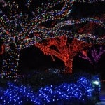 Things to do in Houston, with kids, for Winter! Houston Events for November 1, 2016 – January 2, 2017
