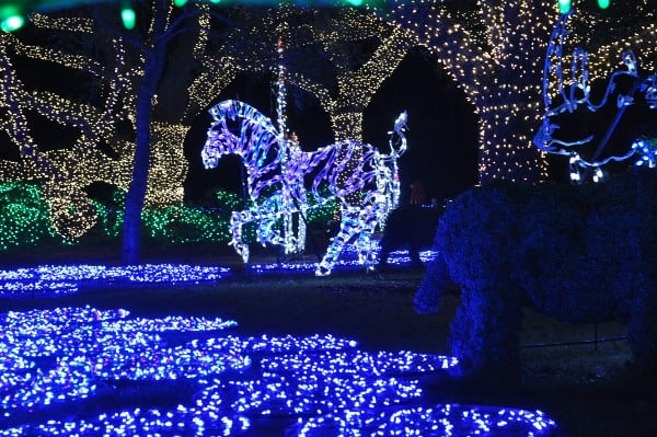 Houston Zoo Lights Zebra