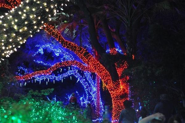 Houston Zoo Zoo Lights