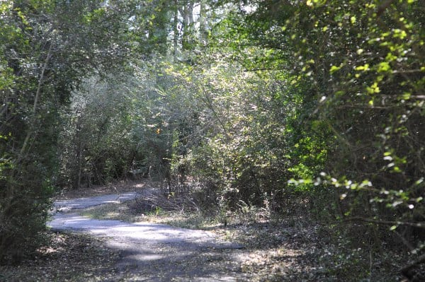 Theis Attaway Nature Park Trail BigKidSmallCity