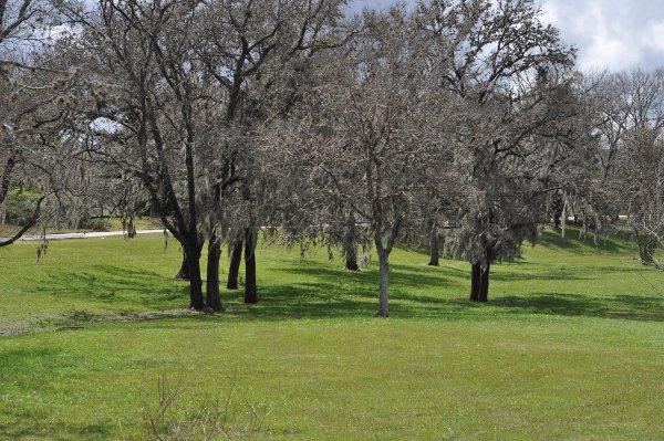 Brays Bayou Greenway Trail 3