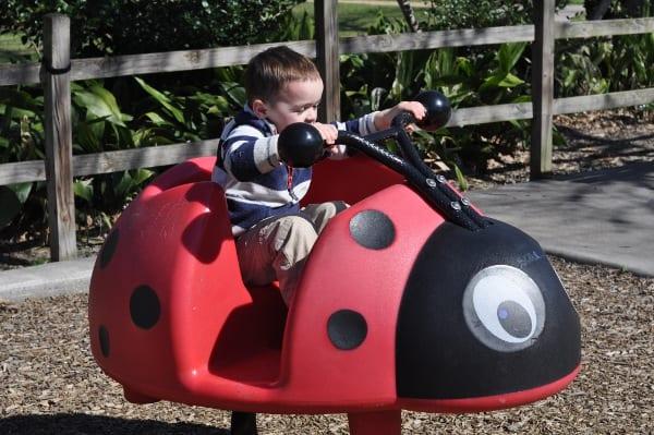 Briarbend Park Ladybug