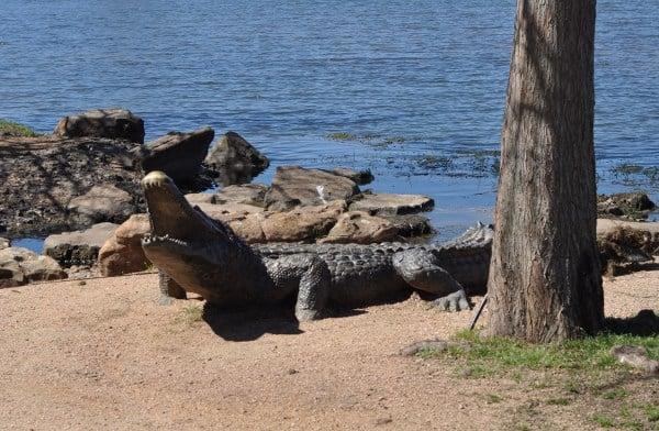 Memorial Park Sugar Land Gator