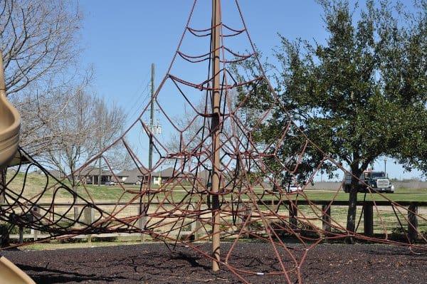 Memorial Park Sugar Land Spider web