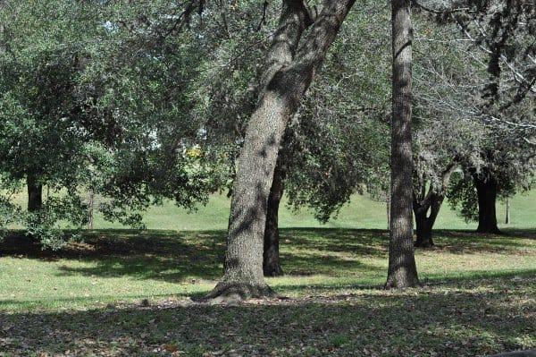 Parkwood Park