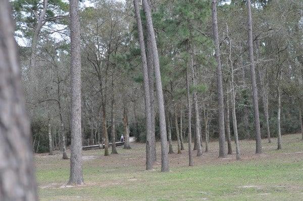 Telge Park Forest