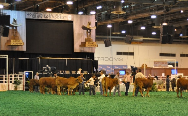 Houston Livestock Show and Rodeo Competition