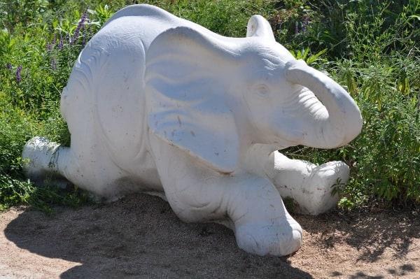 WIH Elephant
