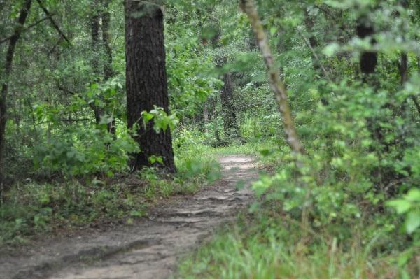 Lake Houston Wilderness Park Trail BigKidSmallCity