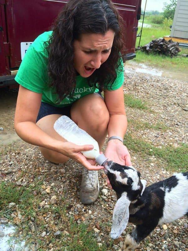 All We Need Farm Feeding Baby Goat