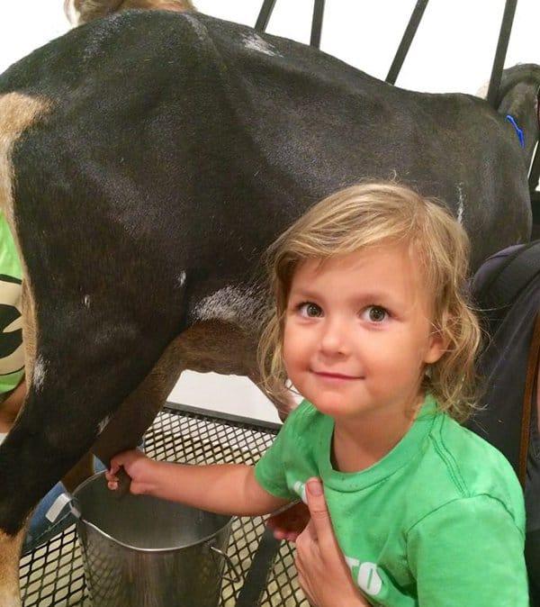 All We Need Farm Milking Goat