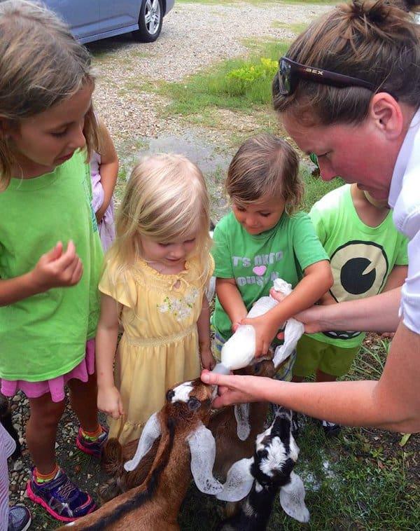 All We Need Farms Feeding Goats
