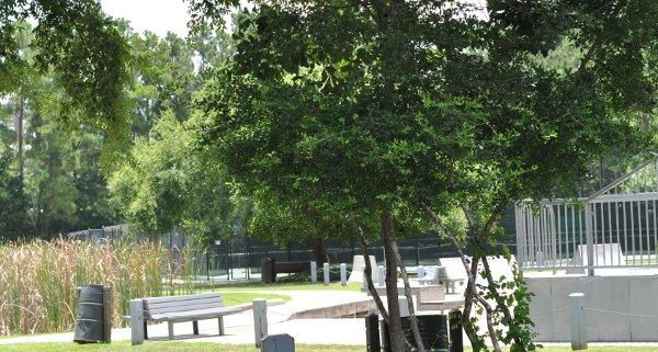 Creekwood Park The Woodlands Skateboard Ramps