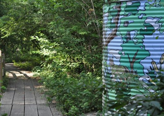 Houston Arboretum Trail