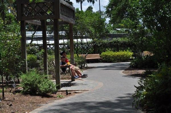 Mercer Arboretum Botanical Gardens Swing