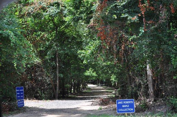 Mercer Arboretum Trail