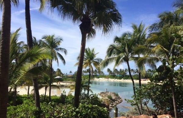 Paradise Island Bahamas Palm Trees