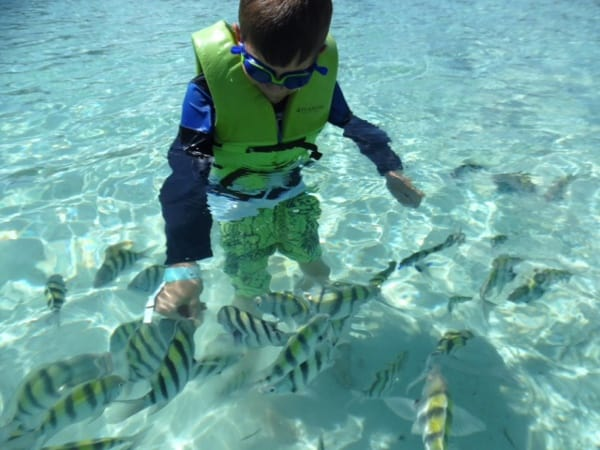 Paradise Island Bahamas in the Water with Fish