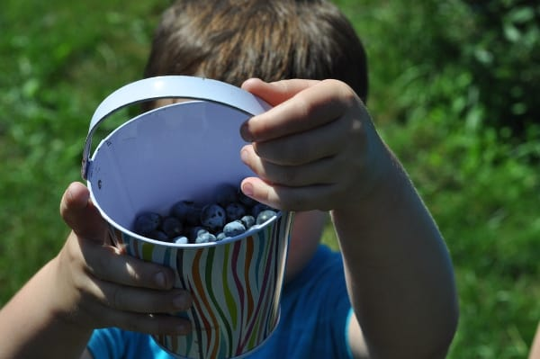 Pick Your Own Blueberries Bucket