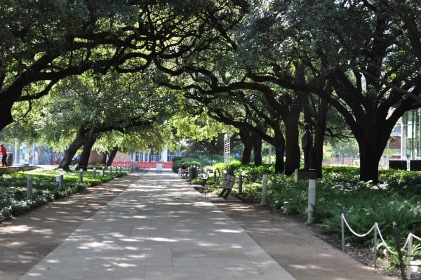 discovery-green-trees-and-sidewalk