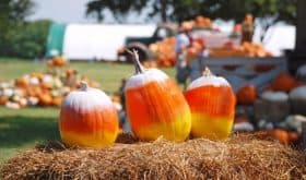 Give Away: Family 4 Pack of Tickets to Farm Fun at Blessington Farms!