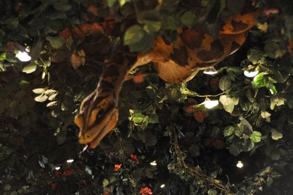 rainforest-cafe-houston-galleria-snake