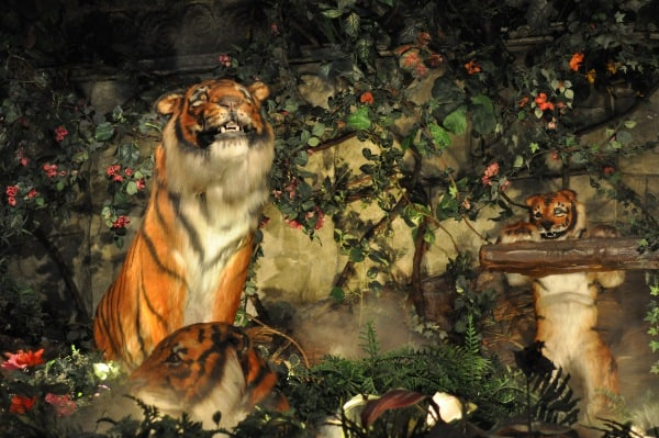 rainforest-cafe-houston-galleria-tigers