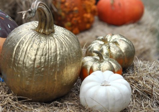 blessington-farms-gold-pumpkin