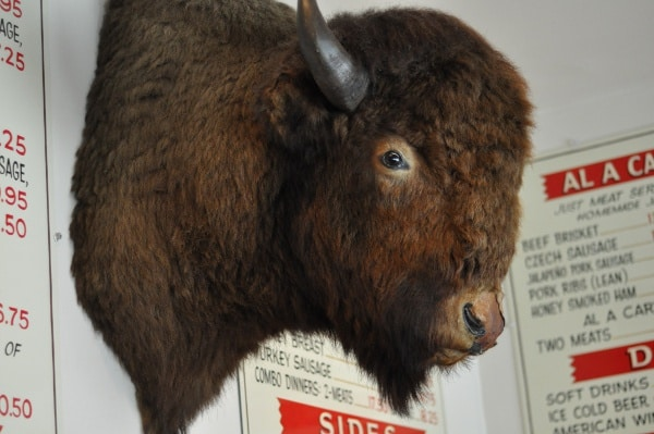 goode-company-bison