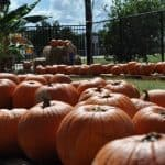 Audio: Favorite Houston Family Events for this Weekend (and Week): October 20-26, 2016