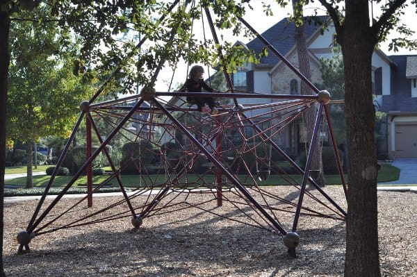 tupelo-park-the-woodlands-spider-web
