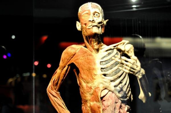 Body Works RX Smoker