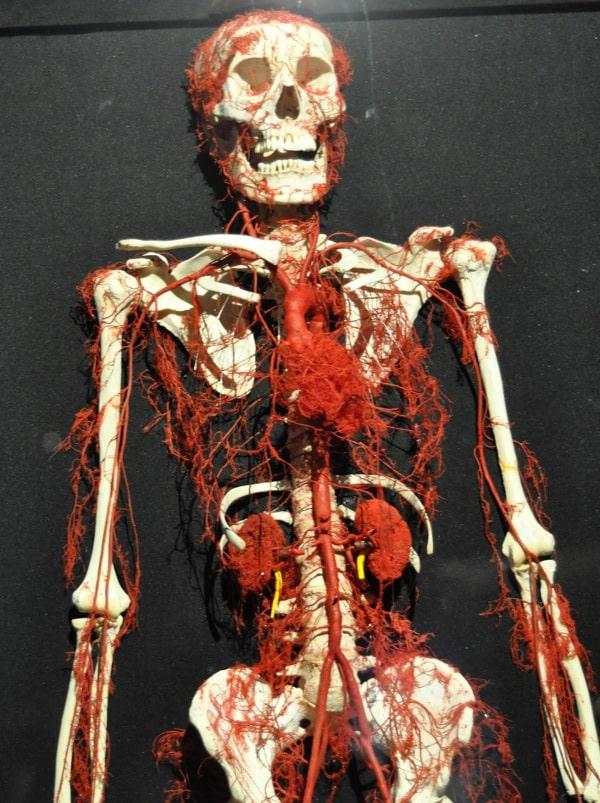Body Works RX arteries