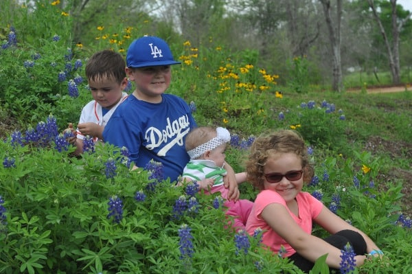 Bluebonnets at Blessington Farms
