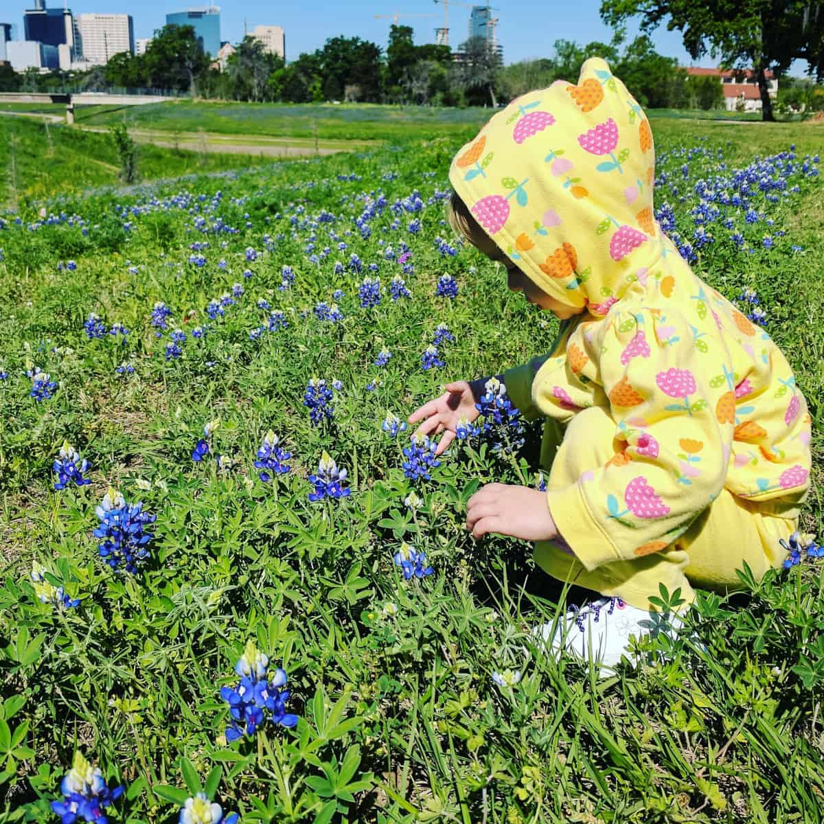 Bluebonnets at Brays Bayou Houston