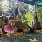 Zoo Boo at the Houston Zoo… Beat the Crowds and Find Parking