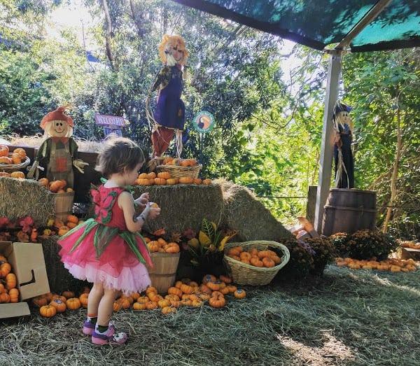 Houston Zoo Pumpkin Patch