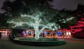 Houston Zoo Lights 2018: Beat the Crowds & Save Money at Houston's Popular Holiday Event!