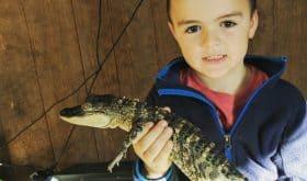 Feed Giant Tortoises, Alligators & Crocodiles at Crocodile Encounter!