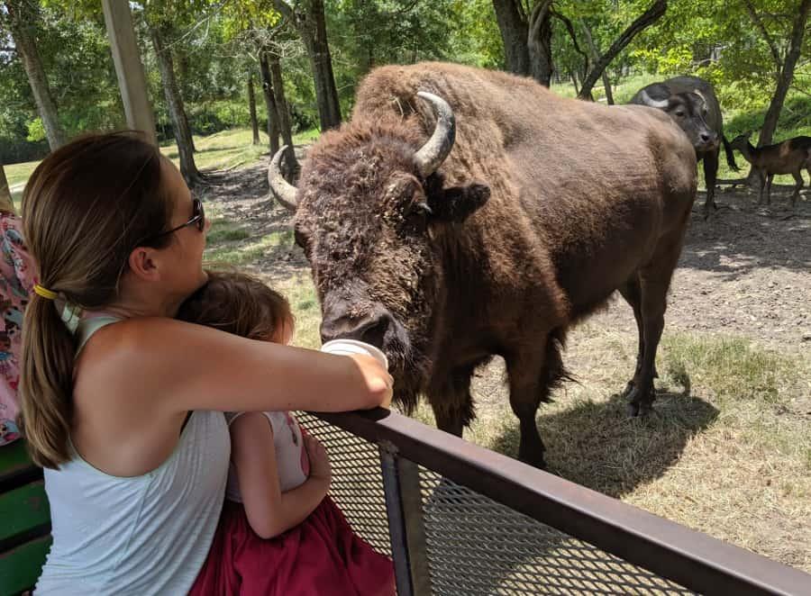 Bayou Wildlife Zoo Near Houston