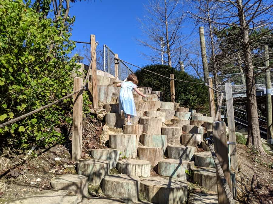 Log steps at Fish Family Play Area