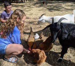 Houston Area Farms